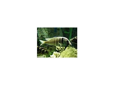 Photo Small Aquarium Fish 9 Animal