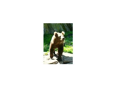 Photo Small Bear Animal
