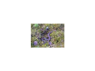 Photo Small Wild Viper Animal