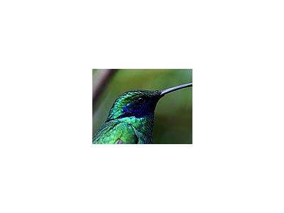 Photo Small Bird Animal