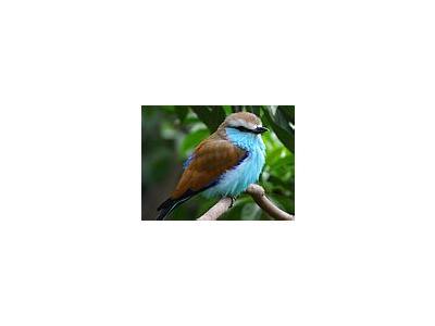 Photo Small Bird 2 Animal