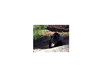 Photo Small Black Bear 3 Animal