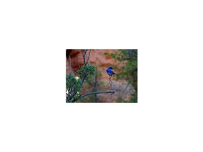 Photo Small Blue Bird Animal