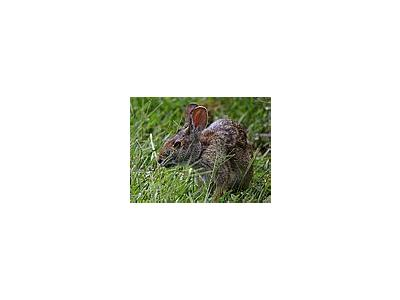Photo Small Bunny Animal