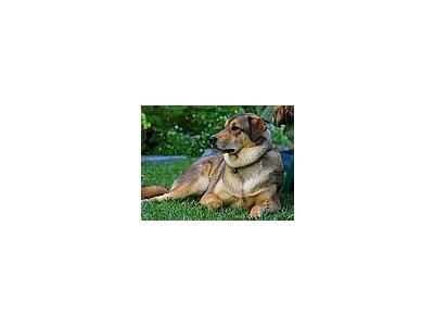 Photo Small Dog 2 Animal
