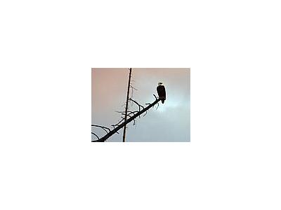 Photo Small Eagle Animal