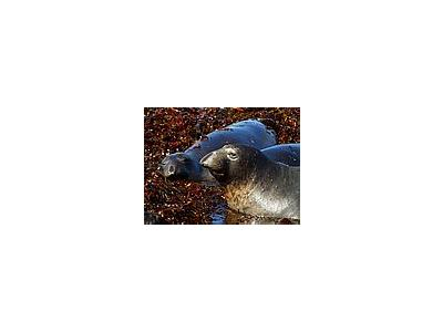 Photo Small Elephant Seals Animal
