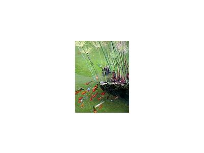 Photo Small Fishes In Pond Animal