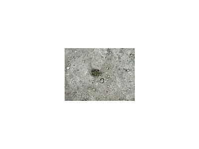 Photo Small Frog Animal