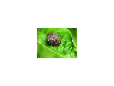 Photo Small Garden Snail Animal