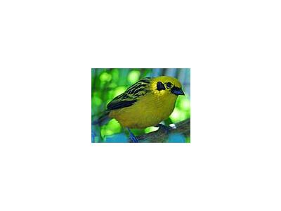 Photo Small Yellow Bird Animal