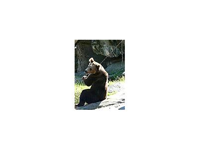 Photo Small Bear Sitting On The Behind Animal