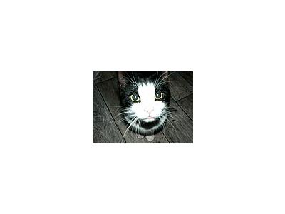 Photo Small Black And White Cat Animal