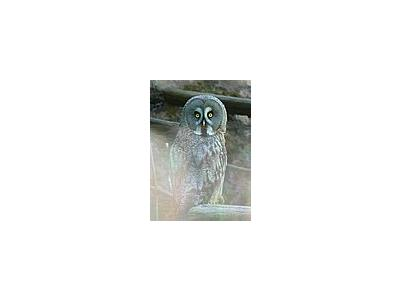 Photo Small Owl Animal