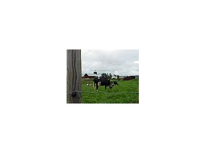 Photo Small Cow Pasture Animal