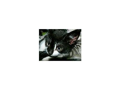 Photo Small Cute Kitten Animal