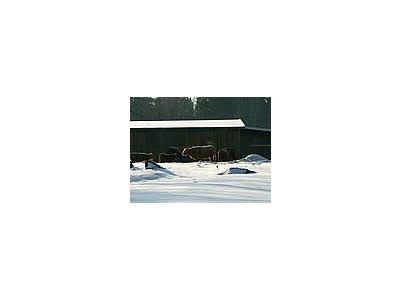 Photo Small Freezing Cattle Animal