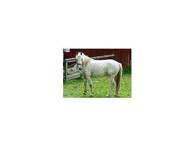 Photo Small White Horse Animal