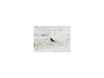 Photo Small Willow Tit Eating Seed Animal