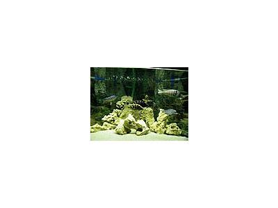 Photo Small Aquarium Fish 14 Animal