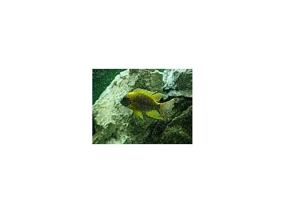 Photo Small Aquarium Fish 2 Animal