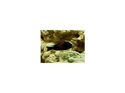 Photo Small Aquarium Fish 21 Animal