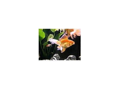 Photo Small Aquarium Fish 25 Animal