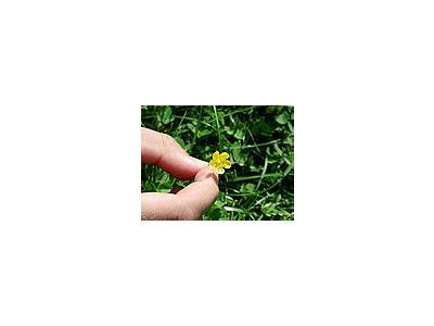 Photo Small Flower 9 Flower