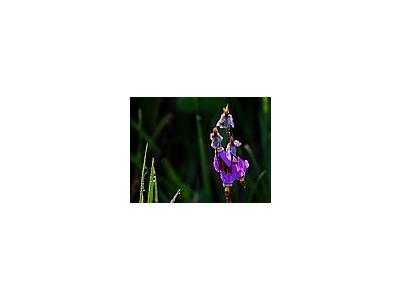Photo Small Meadow Wildflowers Flower