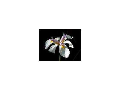 Photo Small Orchids Flower