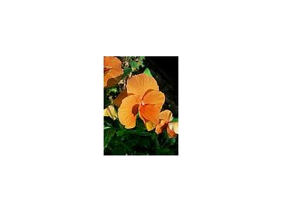 Photo Small Orange Flower Flower