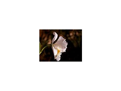 Photo Small Orchid Petals Flower