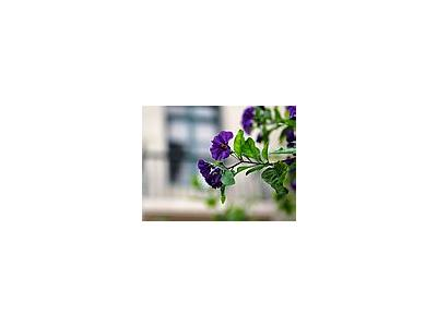Photo Small Purple Flowers Flower