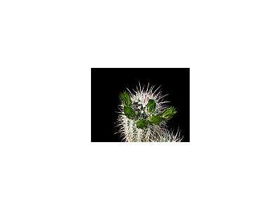 Photo Small Cactus 60 Flower