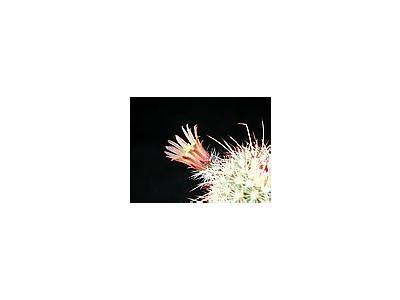 Photo Small Cactus 61 Flower
