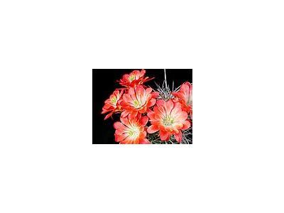 Photo Small Cactus 99 Flower