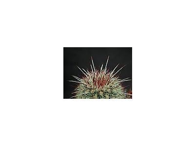 Photo Small Cactus 200 Flower