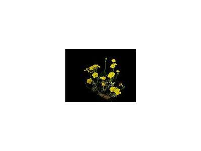 Photo Small Cactus 205 Flower
