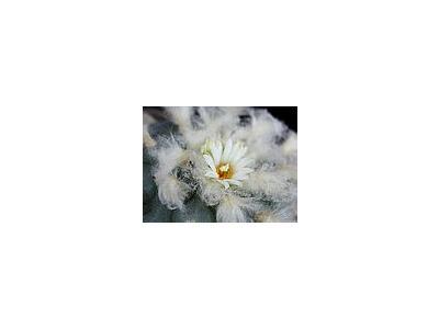 Photo Small Cactus 212 Flower
