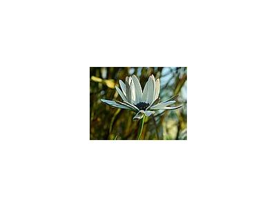 Photo Small Dew 2 Flower