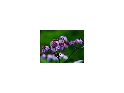 Photo Small Diasy Flower