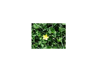 Photo Small Flower 10 Flower