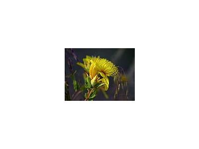 Photo Small Flower 17 Flower