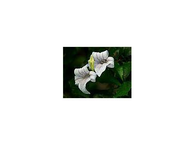 Photo Small Flower 19 Flower
