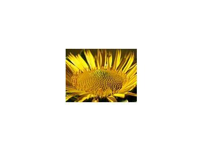 Photo Small Flower 26 Flower
