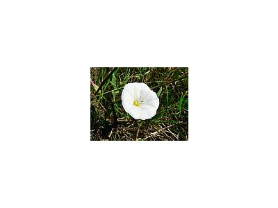 Photo Small White Flower Flower