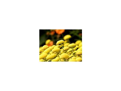 Photo Small Yellow Flowers Flower