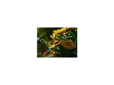 Photo Small Yellow Flowers 3 Flower