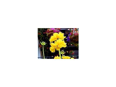 Photo Small Yellow Flowers 5 Flower