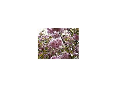 Photo Small Flowering Tree Flower